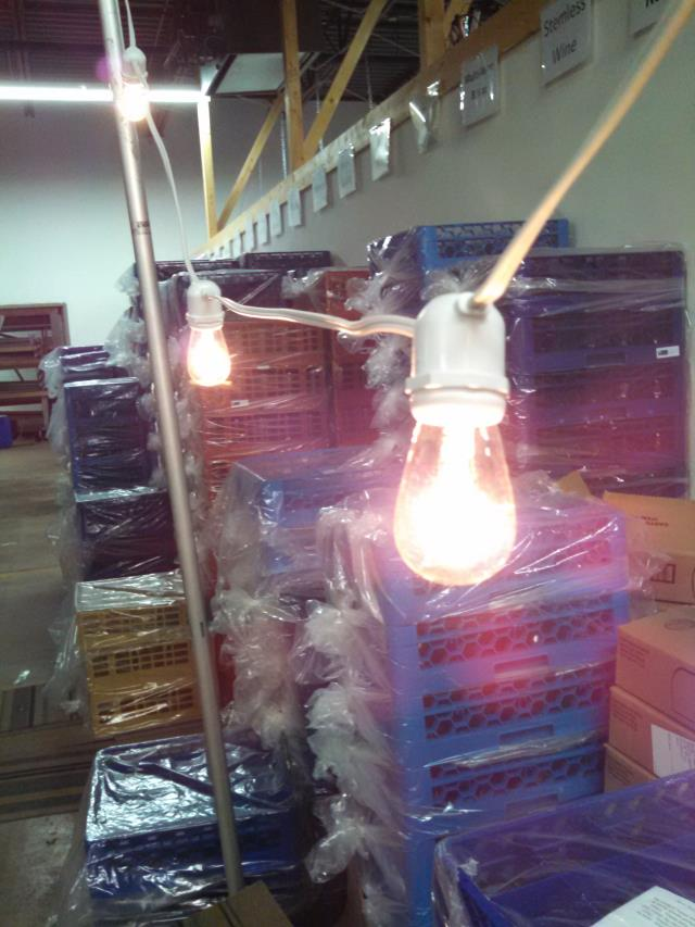 Where to find Lighting, Cafe String 100  strand in Grand Rapids